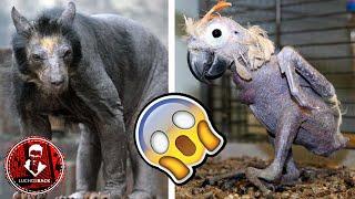 TOP 7 ANIMALES HERMOSOS QUE SON FEOS SIN PELO