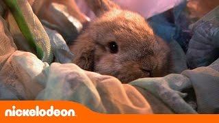 Heidi Bem-Vinda à Casa | Um coelho especial | Nickelodeon em Português