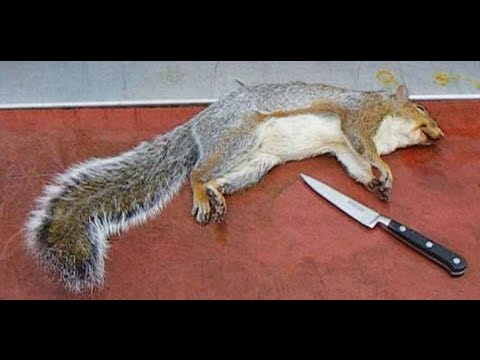 How To Skin And Clean A Squirrel.Grey Squirrel.