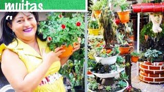 Plantas Que São Perfeitas Para Sol E Sombra