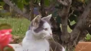 Funny Cats Compilation [Must See] Funny Cat Videos Ever Part 1