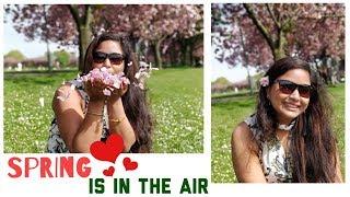 Cherry Blossom Festival in Edinburgh || The Meadows Garden || Sunday Vlog