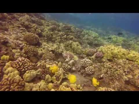 Snorkeling Molokini Crater with 100+ ft visibility - GoPro 1080p