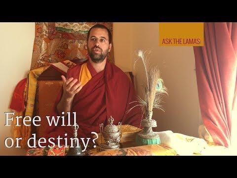 Free will or destiny? Subtitles EN-PT-IT-DE-NL-ES