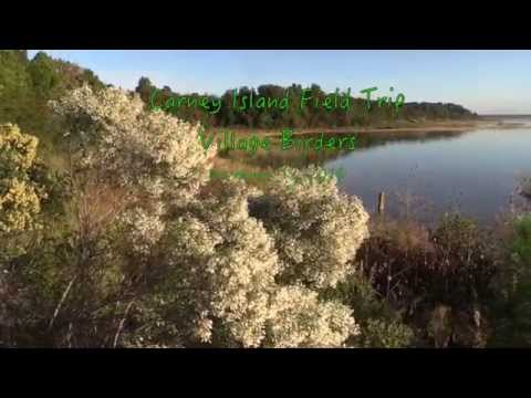 2014-11-12 Carney Island