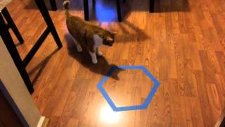 Cat Trap Experiment