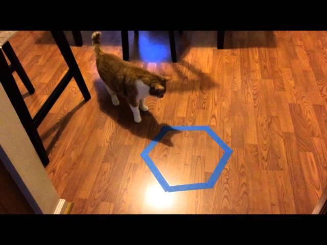 Cat Trap Experiment