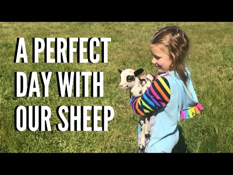 A PERFECT DAY WITH OUR SHEEP | VLOG (painted Desert Sheep)