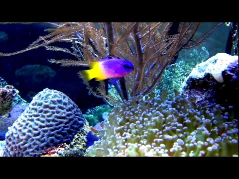 Let's talk Saltwater Fish