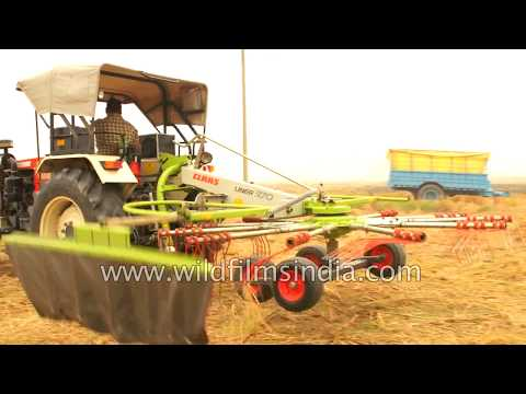 Rotary rake is used to collect hay or straw into windrows