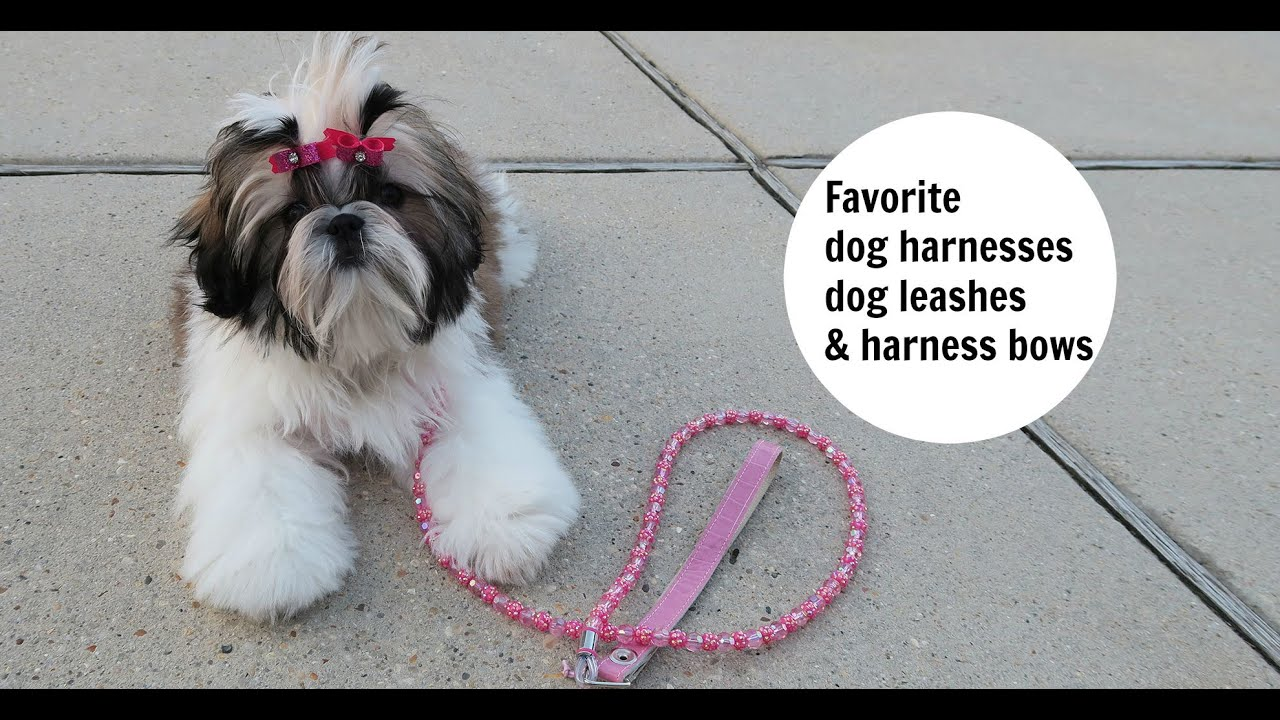 Favorite Dog Harnesses Dog Leashes And Harness Bows Youtube