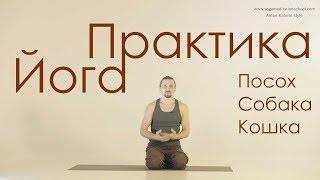 Силовые упражнения Йоги. Практика. Урок 1