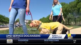 WBAL-TV Highlights University of Maryland Student Puppy Raisers