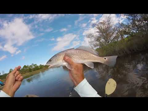 Kayak Redfish Fishing Florida Tips And Techniques