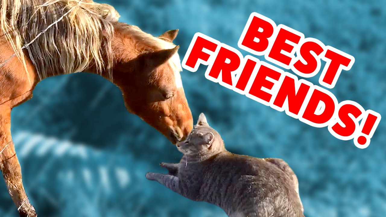 MONKEY RIDES A GOAT & MORE Pets & Animal BFF Videos of 2016 Weekly Compilation | Funny Pet V