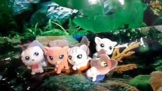 Игрушки Sweet BOX Пушистики котята коллекция 1