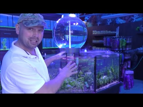NOW OPEN - Dramatic Aquatics (Fish Store In North East England)
