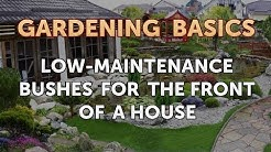 Low-Maintenance Bushes for the Front of a House