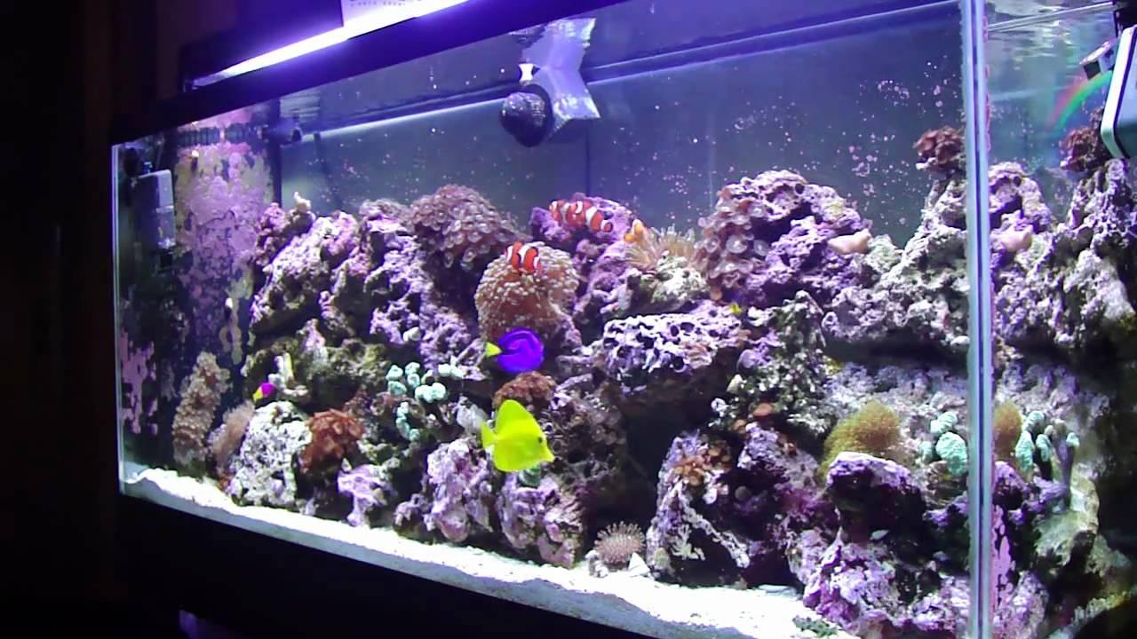 55 Gallon Reef Aquarium With Sump HD