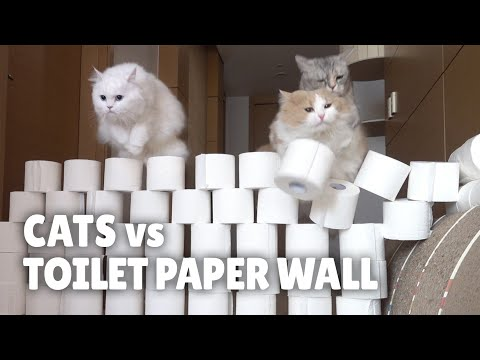 Cats vs Toilet Paper Wall