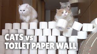Cats vs Toilet Paper Wall