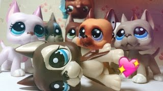 All of my LPS Great Danes (updated)