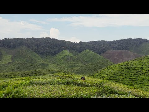 8 Months in Malaysia in 80 seconds ~ (New Colombo Plan Fellowship 2016)