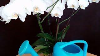 Así Riego mis Orquídeas en casa.