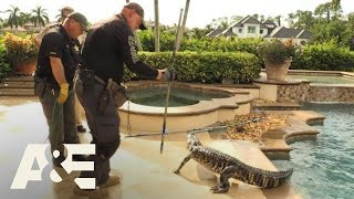 Live Rescue: Gator in the Pool (S3) | A&E
