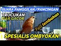Pancingan Panggilan Trucukan Macet Bunyi Biar Gacor Full Tembakan Sepesialis Ombyokan  Mp3 - Mp4 Download