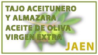 Tajo aceitunero y almazara -  Virgen Extra de Jaén 2.0