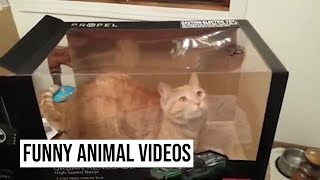 Funniest Cute Cats   Funny Animal Videos