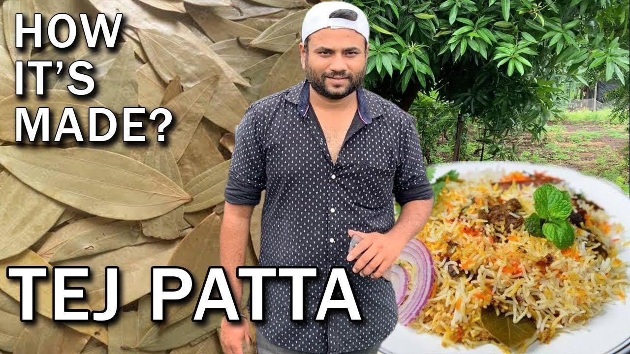 How it's made : Tej patta || Indian bay leaf  || कभी सोचा है कैसा दिखता है तेज पत्तों का पेड़ ||