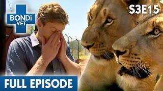 🦁 Lion Surgery In Africa | FULL EPISODE | S03E15 | Bondi Vet