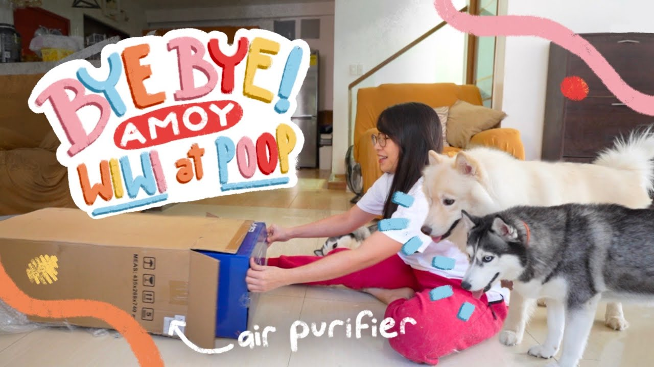 AIR PURIFIER FOR DOGS? (UNBOXING LASCO SMART WIFI AIR PURIFIER)