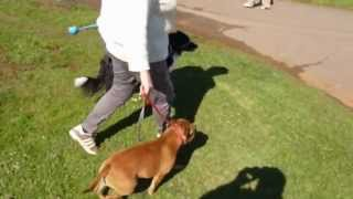 How To Stop Your Dog From Pulling- Using Your Lead & Collar Differently.