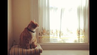 TIPS FOR STOPPING YOUR CATS SPRAYING