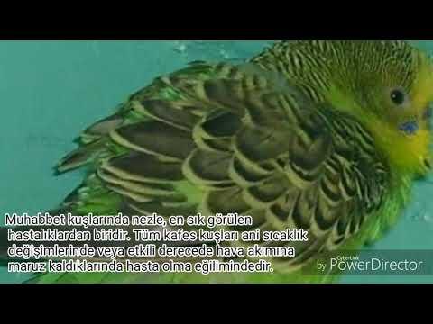 Kuşlarda (Soğuk Algınlığı) (Nezle) (Grip) Tedavisi