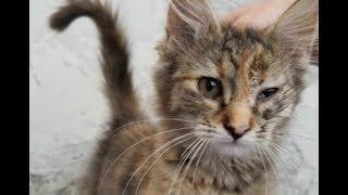 Котёнка нашли под уличным фонарём – она прекратила плакать, когда поверила, что её любят