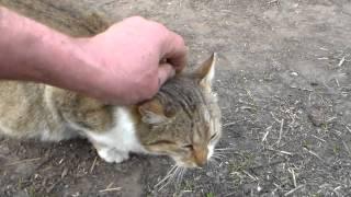 Круглая кошка.)))