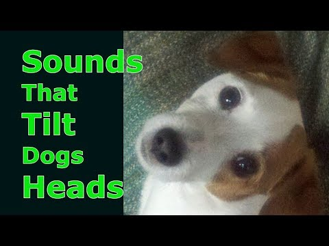 Sounds That Tilt Dogs Heads Sounds Dogs Love Most Dog TV Dog Treat