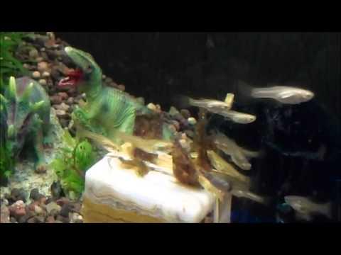 guppies vs ocean nutrition marine algae