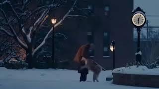 Способности собака