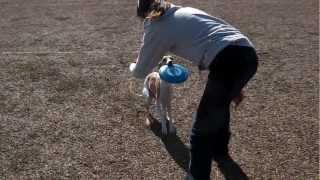 20121125_ 浜名湖チョコ ディスタンス レディース 最近の チョコ(2歳半...