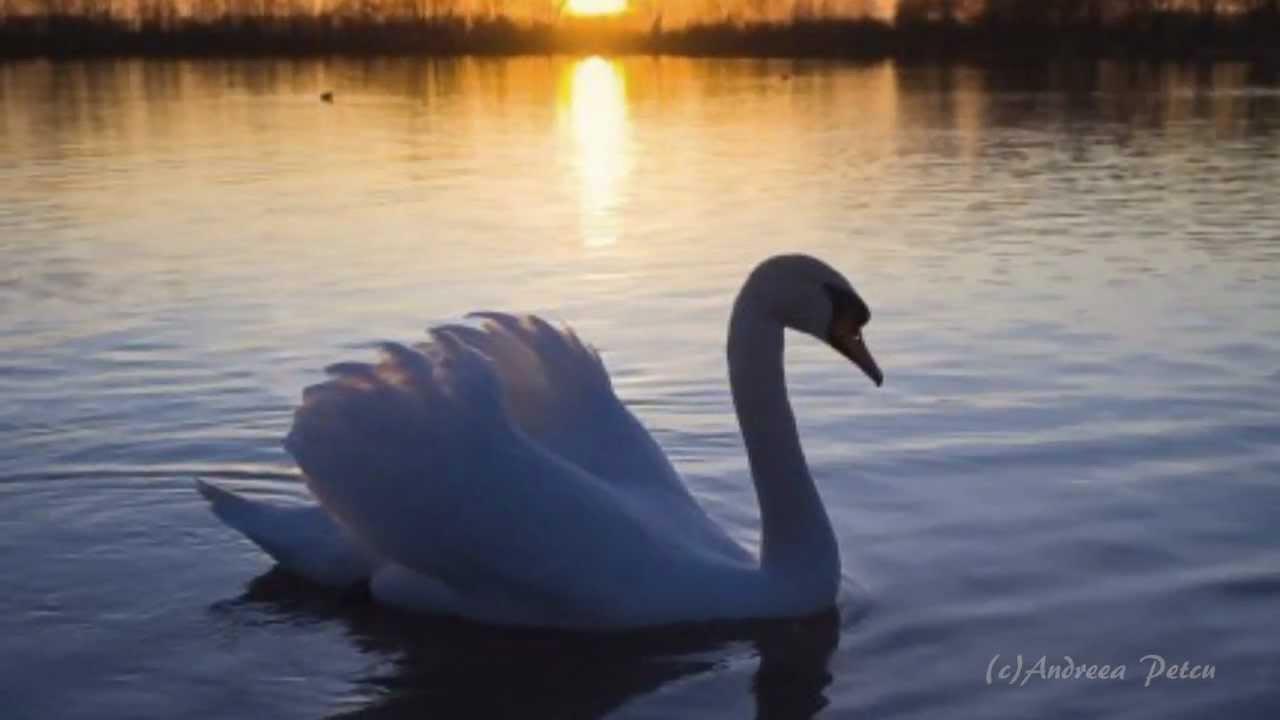Elegy is a swan song of lyrical art
