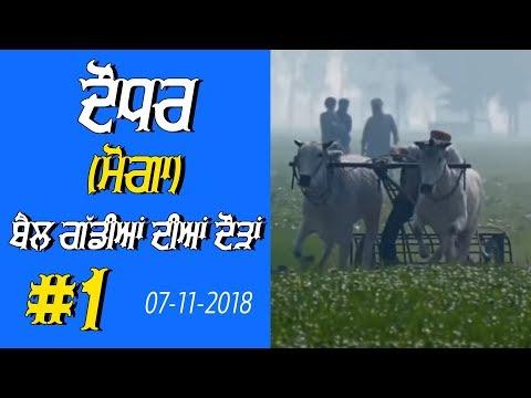 OX RACES #1 🔴 ਬੈਲ ਗੱਡੀਆਂ ਦੀਆਂ ਦੌੜਾਂ बैलों की दौड़ें  بیلوں کی دودن  at DAUDHAR Moga 17 01 2019