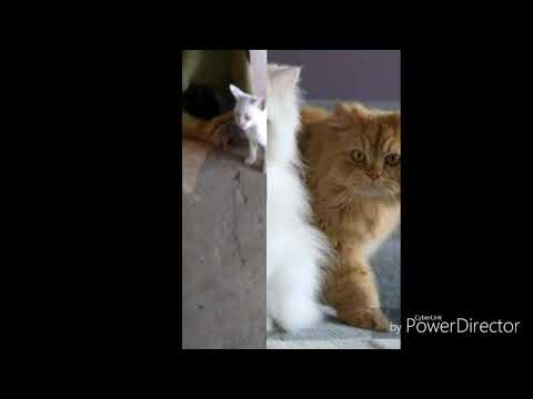 Top 5 cats fighting and talking