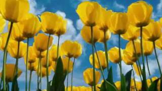 Using Only Windows XP Wallpapers & Music.wmv