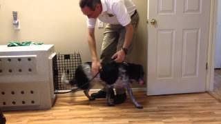 Crate Training A Border Collie-mix - Reno Dog Training With Katz Trains Dogs