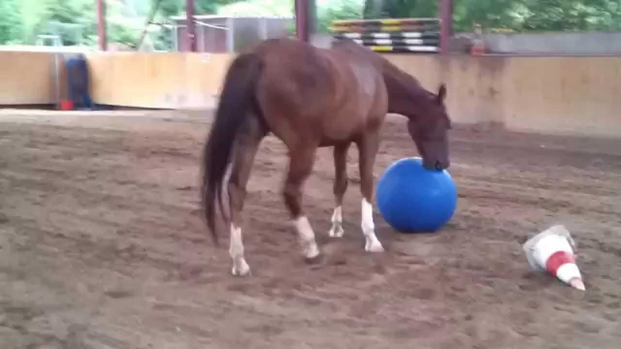 Pferde Und Pony Spiele